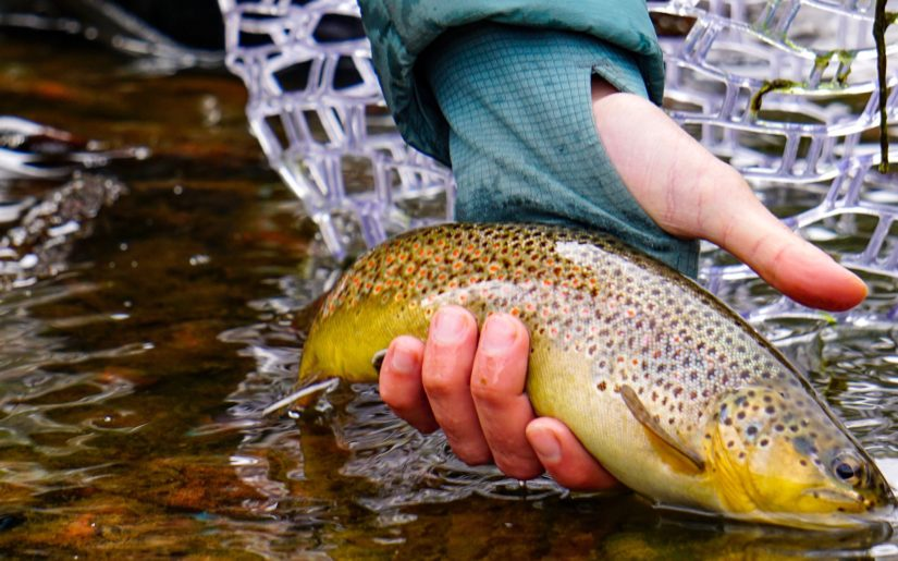 Campfire Collective Fly Fishing Ambassador Shyanne Orvis releasing a speckled trout after catching it in a stream.