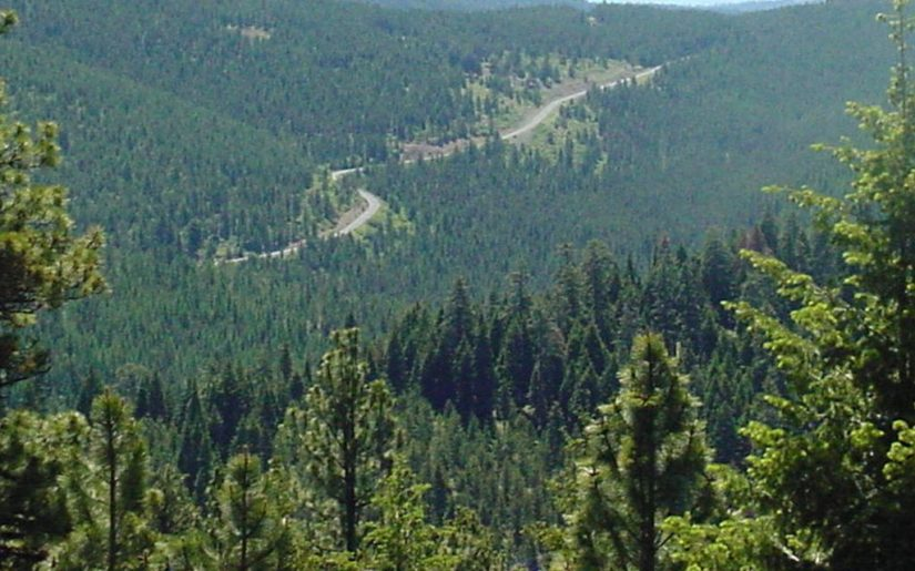 Endless trees and a distant road in an Oregon forest.