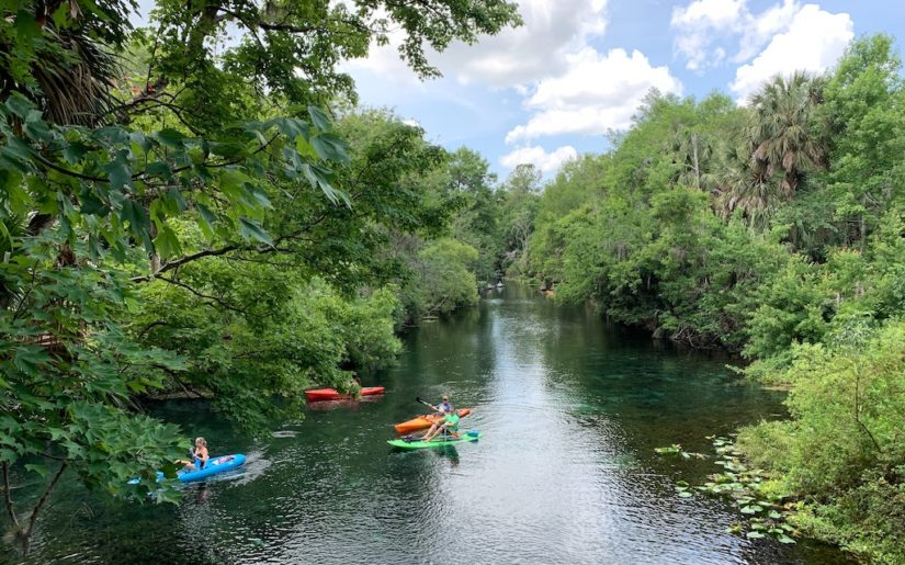 Group of kayakers paddling down a river lined with trees.